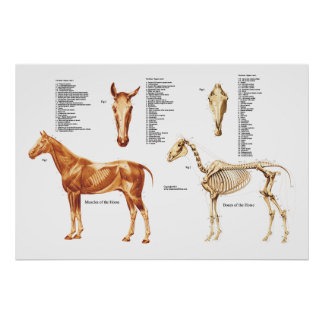 Posters affiches toiles chevaux for Poster de porte cheval