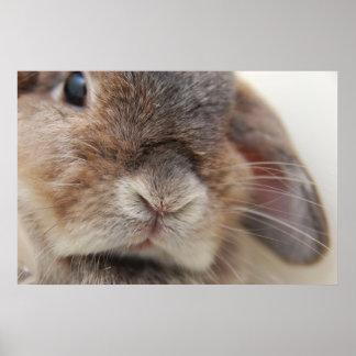 Poster L'Andora le lapin : Regard fixe