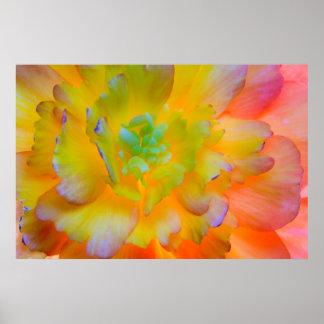 Poster Le bégonia rougeoyant fleurissent | Seabeck, WA