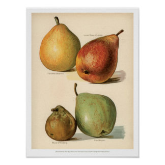 Poster Le cru porte des fruits illustration - la poire 2