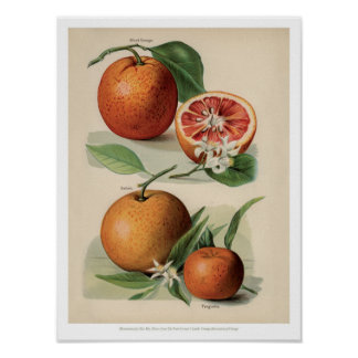 Poster Le cru porte des fruits illustration - orange
