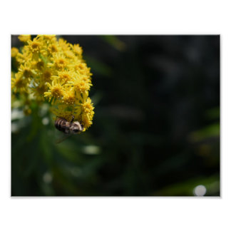 Poster Le jaune fleurit la photographie de nature de
