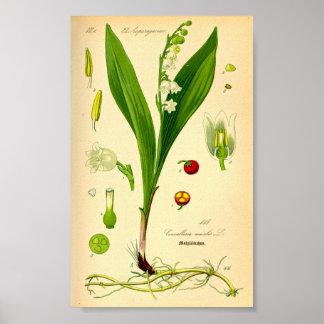 Poster Le muguet (majalis de Convallaria)