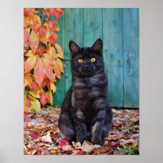 Poster Le rouge drôle mignon de chaton de chat noir