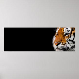 Poster Le tigre observe la direction de courage d'art
