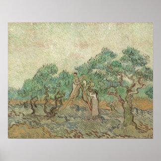 Poster Le verger olive