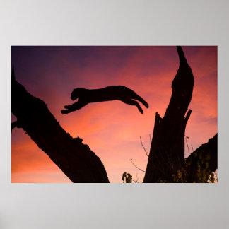 Poster Léopard sautant au coucher du soleil