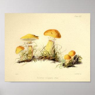 Poster Les champignons du cru 1855 jaunissent la copie