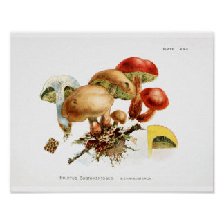 Poster Les champignons du cru 1895 jaunissent la copie
