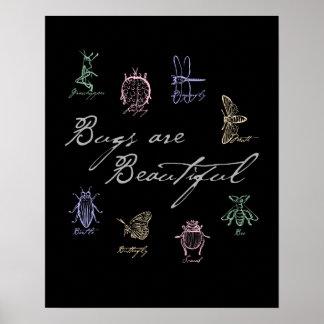 Poster Les insectes sont beaux