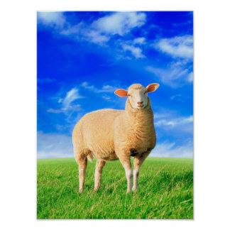 Poster Les moutons d'or