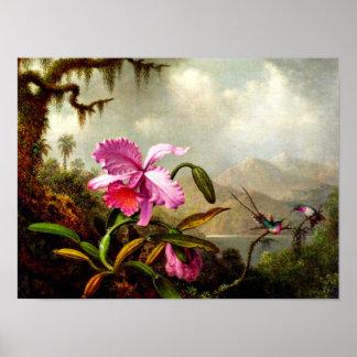 Poster Les orchidées et les colibris s'approchent d'un