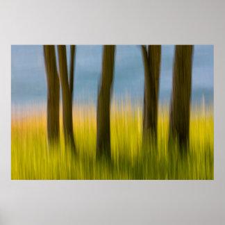 Poster Les troncs d'arbre et engazonnent les îles de  