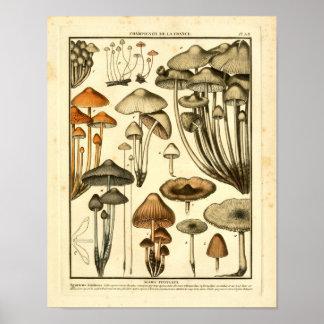 Poster Les variétés vintages de Brown répand copie de