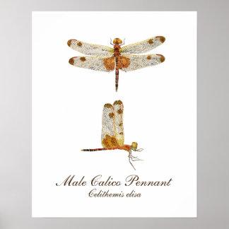 Poster Libellule masculine de fanion de calicot