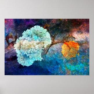 Poster Lichen coloré