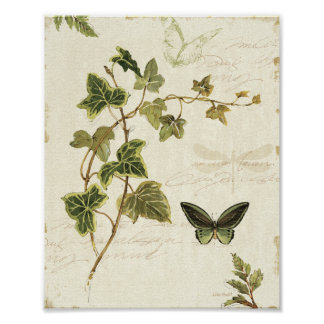 Poster Lierres et papillons