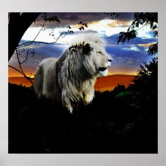 Poster Lion de l'Afrique du Sud dans la jungle
