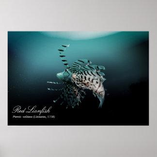 Poster Lionfish rouge (volitans de Pterois, Linnaeus,