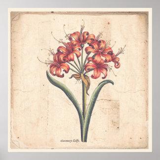 Poster Lis rouge de Guernesey d'affiche botanique antique