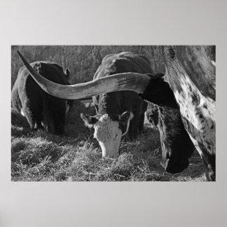 Poster Longhorn et amis à la ferme