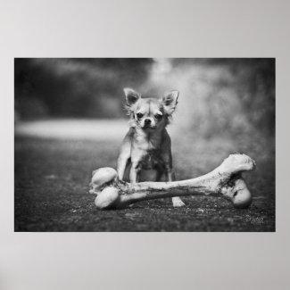 Poster l'Os de Joy , Chihuahua