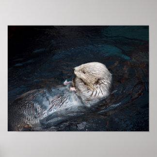 Poster Loutre mangeant le zoo sauvage aquatique de nature