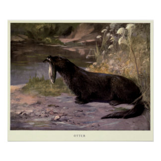 Poster Loutre vintage Painting (1909)