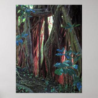 Poster Lumière de fin de l'après-midi sur des racines de