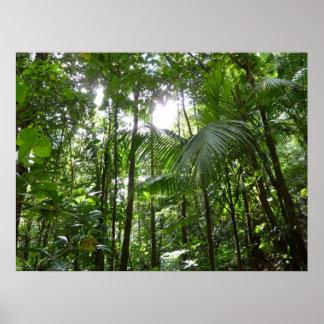 Poster Lumière du soleil par le vert tropical d'auvent de