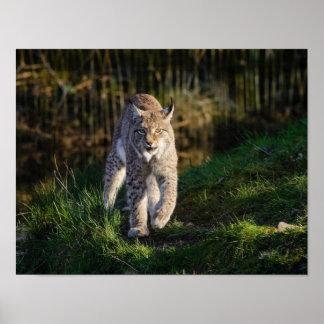 Poster Lynx de égrappage