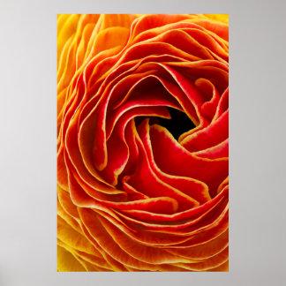 Poster Macro gisements de fleur de la fleur | Carlsbad,
