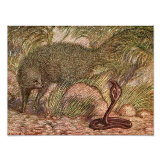 Poster Mangouste et cobra par Sargent, animal sauvage
