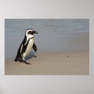 Poster Marche africaine de pingouin