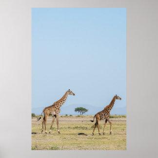 Poster Marche de deux girafes