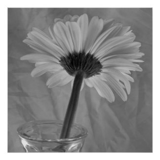 Poster Marguerite noire et blanche