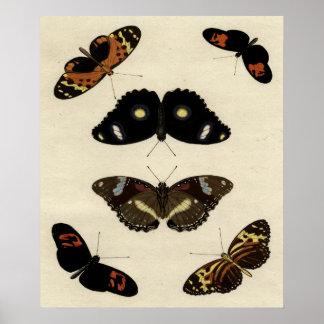 Poster Mélange coloré de papillon sur l'arrière - plan