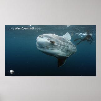 Poster Mola de Mola