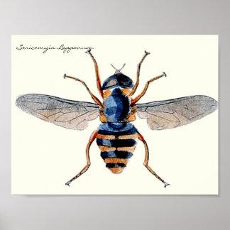 Poster Mouche scientifique d'entomologie d'insectes