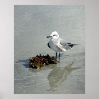 Poster Mouette sur la plage avec l'algue