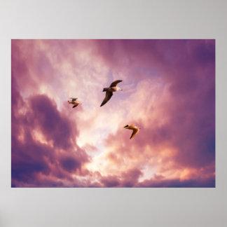 Poster Mouettes volant dans un ciel de coucher du soleil