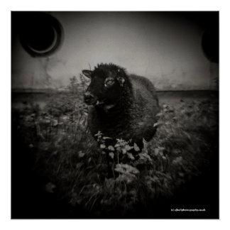 Poster Moutons - affiche d'art de photographie