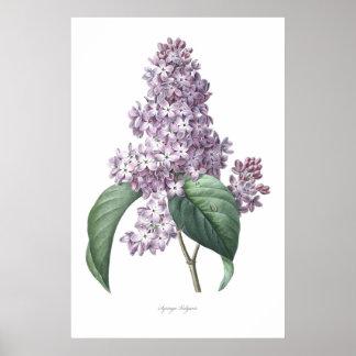 Poster Nature, copie botanique, art de fleur de lilas