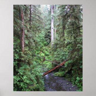 Poster Nature de courant de forêt