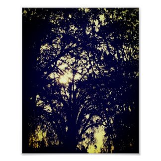 """Poster Nature ensoleillée 24"""" d'arbres matte de papier"""