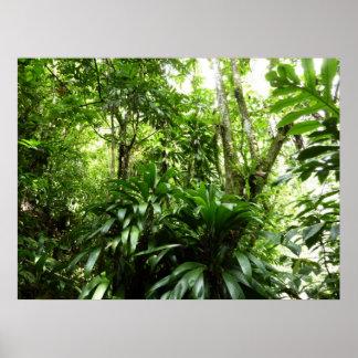 Poster Nature verte tropicale de la forêt tropicale I
