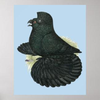 Poster Noir de pigeon de trompettiste