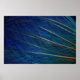 Poster Oiseau bleu des plumes de paradis