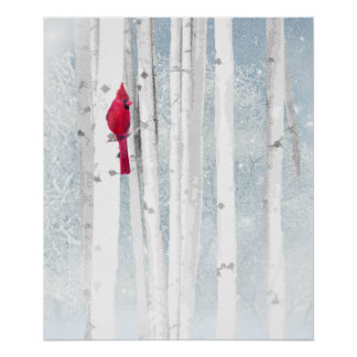 Poster Oiseau cardinal rouge dans le bel arbre de bouleau