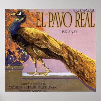 Poster Oiseau vintage de paon de Pavo d'EL d'art